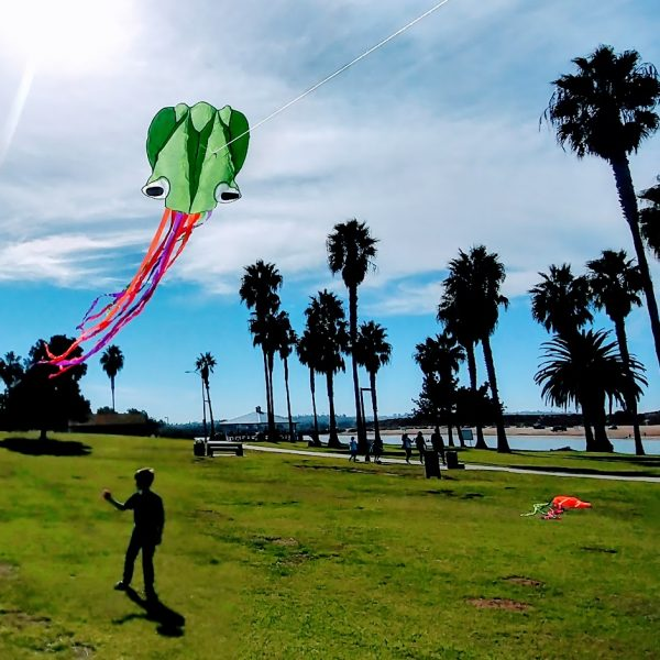 Kites at Mission Bay
